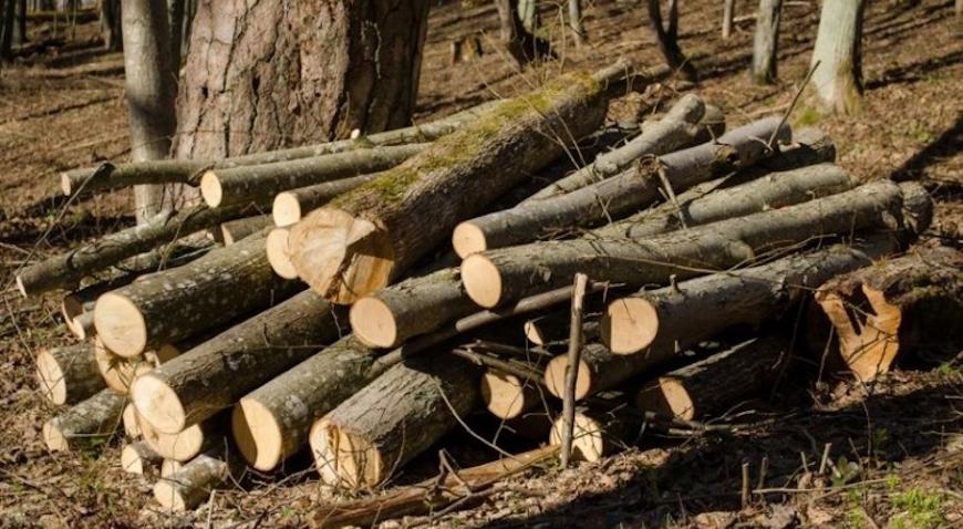 U šumi na zelinskom području posjekao tuđa stabla