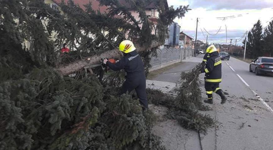 FOTO: Vatrogasci Paukovca s ceste sklanjali stablo i telefonski stup