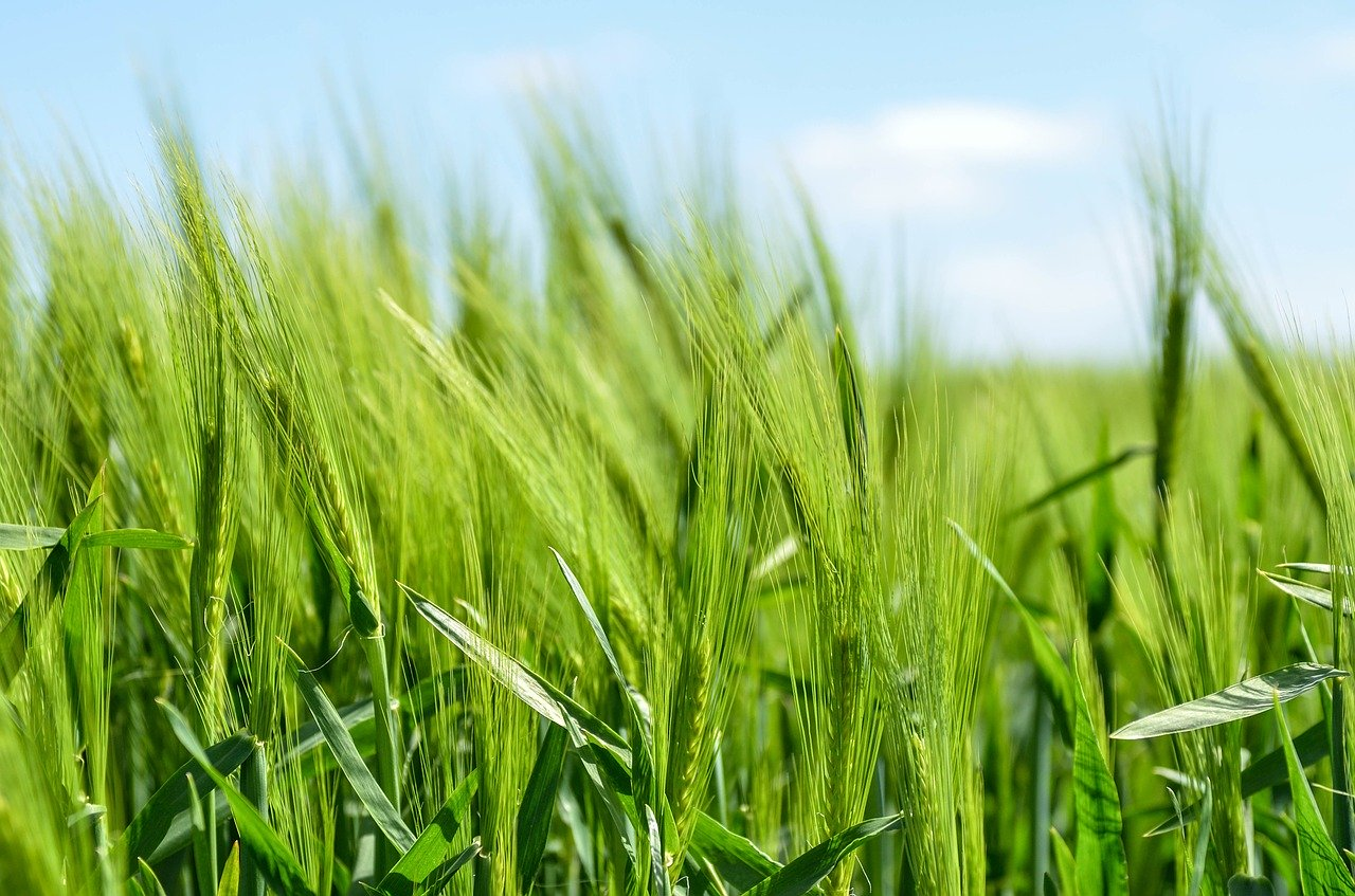 Općina Križ uspostavlja kratki opskrbni lanac lokalnih poljoprivrednih proizvođača